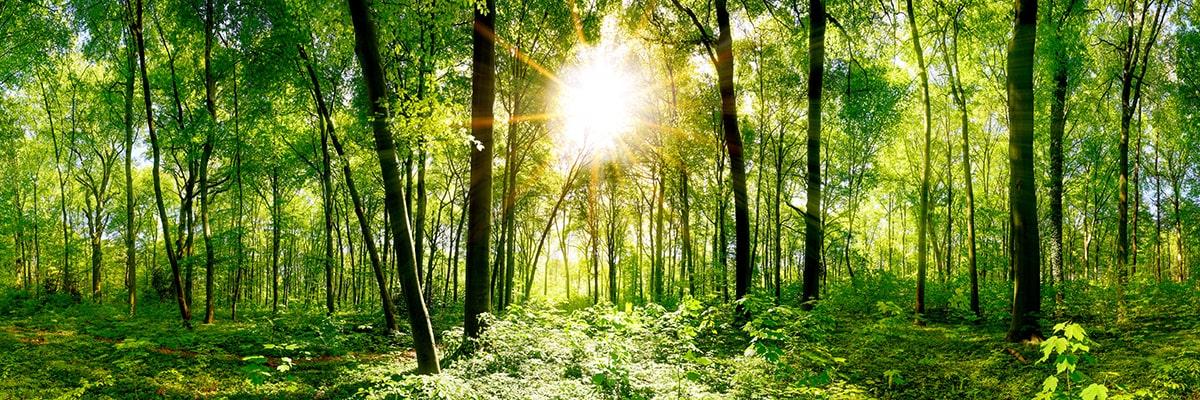 Wald in Deutschland